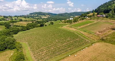 Ancre Hill vineyard Wales