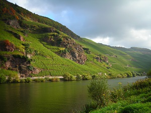 German wine tasting Mosel v Rhine Edinburgh