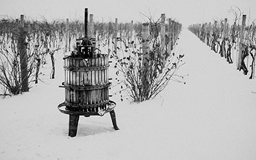 MORE TO CANADA'S VINEYARDS THAN ICEWINE image