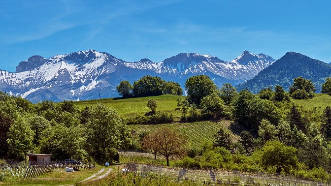 WINES OF THE FRENCH ALPS image