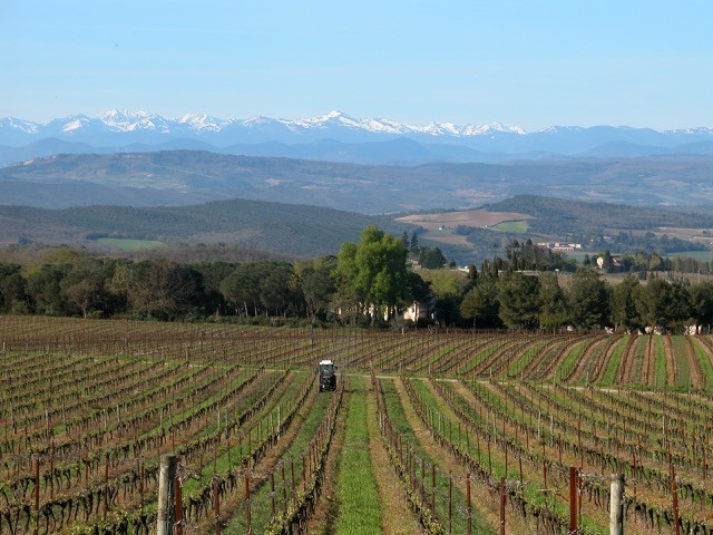 LIMOUX image
