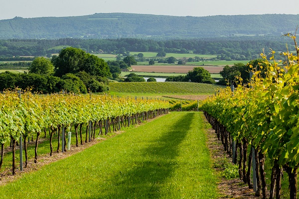 FOUR RISING STARS IN ENGLISH WINE image